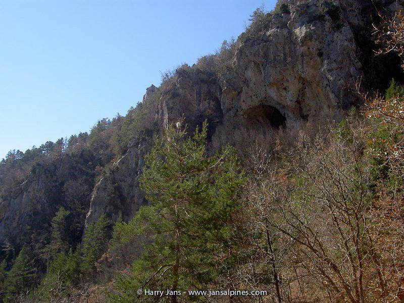 habitat Primula allionii