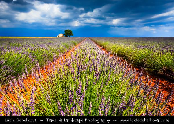 Europe - France - Provence-Alpes-Côte d'Azur Region - Valensole