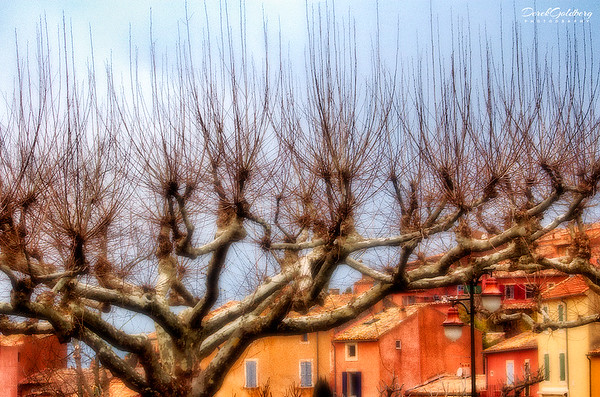 Leafless Pollard Willow Tree in Winter - Provence, France