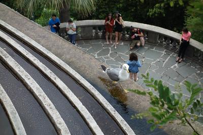 Seagull, Nice