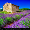 Europe - France - Provence-Alpes-Côte d'Azur Region - Vaucluse - Sault area - Historical village surrounding famous for its fields of lavender, full of pure scent and lovely violet blooms - Lonely stone house