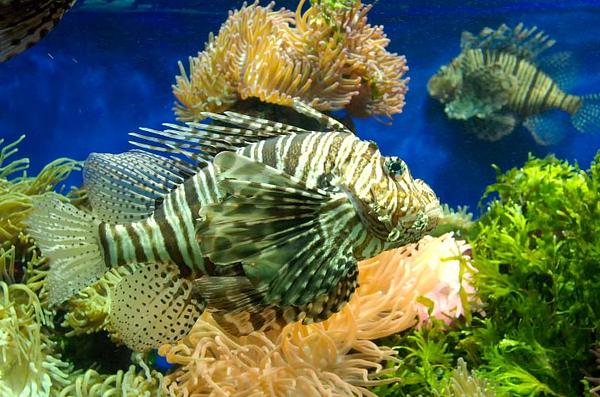 Oceanographic Museum #2 - Monte Carlo, Monaco