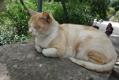 Botanical Garden Cat, Montpellier