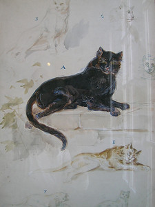 Cambo-les-Bains - Watercolour Sketches of a Cat