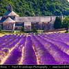 Europe - France - Provence-Alpes-Côte d'Azur Region - Vaucluse - Notre-Dame de Senanque - One of purest examples of primitive Cistercian architecture with lavender field in front