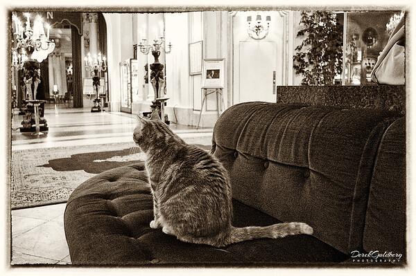 House Cat, Lobby of Negresco Hotel - Nice, France
