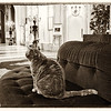 House Cat, Lobby of Negresco Hotel - Nice, France