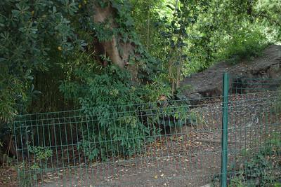 Common Redstart in Botanical Gardens, Montpellier