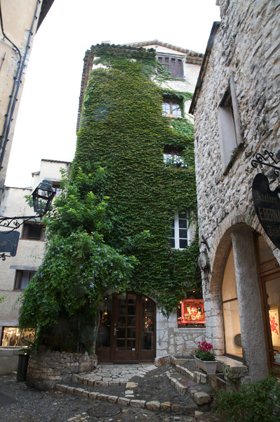 Ivy covered building - St Paul de Vence