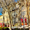Along the tree lined Cours Mirabeau - Aix en Provence, France