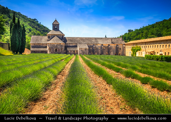 Europe - France - Provence-Alpes-Côte d'Azur Region - Vaucluse - Notre-Dame de Senanque - One of purest examples of primitive Cistercian architecture with lavender field in front
