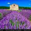 Europe - France - Provence-Alpes-Côte d'Azur Region - Vaucluse