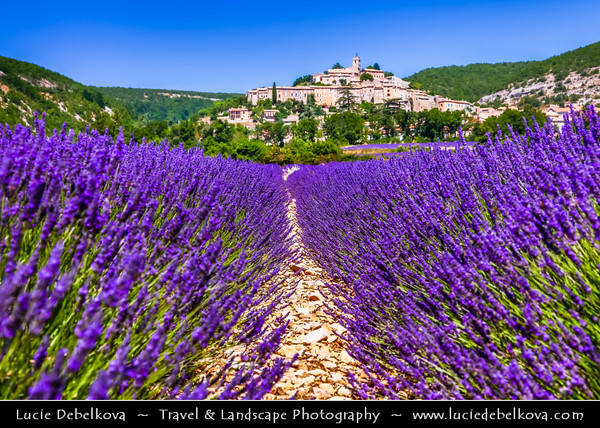 Europe - France - Provence-Alpes-Côte d'Azur Region - Vaucluse - Banon - Historical village famous for its goat cheese, perched on edge of Coulon valley - Very picturesque place with narrow cobblestone alleys & stone village houses, surrounded by fields of lavender, full of pure scent and lovely violet blooms