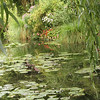 Claude Monet's water lily garden at Giverny, France