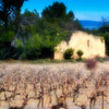 Farm House and Vineyard #1 - Provence, France
