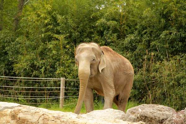 elephant, Hellabrunn zoo Munich, photo 1