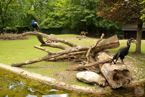 Geo-zoo, Hellabrunn zoo Munich, photo 1