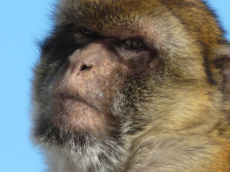 boomer-cruise-ape-gibraltar