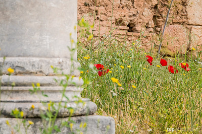 Flowers around column at Delphi.