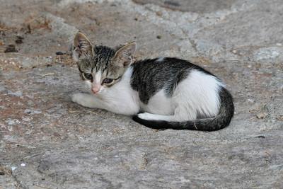 Molyvos - Abandoned Kitten
