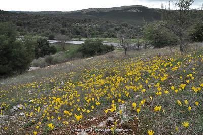 habitat Sternbergia sicula