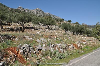 habitat Cyclamen graecum
