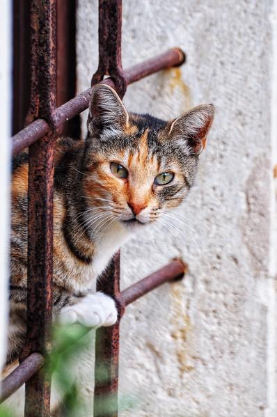Crete Cats