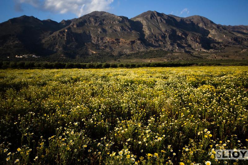 Wildflowers near Fragokastello.<br /> <br /> Crete, Greece