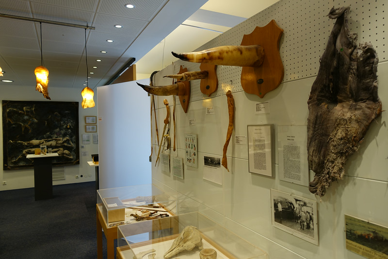 The Icelandic Phallological Museum, located in Reykjavík, Iceland, houses the world's largest display of penises and penile parts.