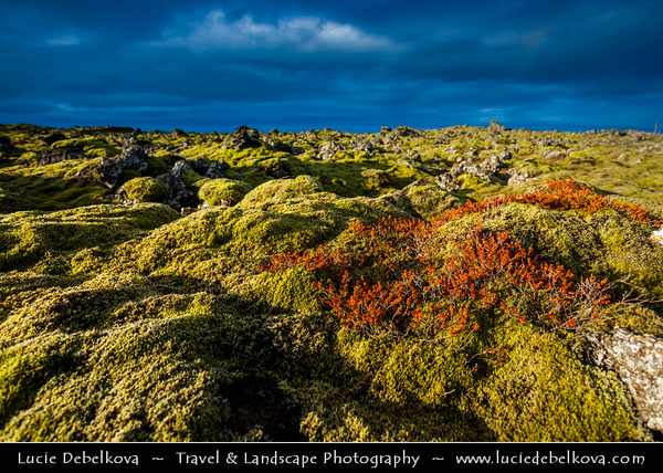 Europe - Iceland - South Western Iceland - Reykjanes peninsula - Reykjanesskagi - Peninsula and a crater row system situated at the south-western end of Iceland, near the capital of Reykjavík - Peninsula marked by active volcanism under its surface & large lava fields - Reykjanesfólkvangur - 300-sq-km wilderness reserve - Late afternoon warm light over beautiful lava field covered with moss