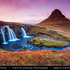 Europe - Iceland - West Iceland - Snæfell Peninsula - Snæfellsnes - Grundarfjörður - Grundarfjordur - Kirkjufell - Church Mountain (463 meters) - Iceland's most iconic pyramid shaped mountain standing isolated along the Atlantic Ocean coast - Seen from the Kirkjufellsfoss waterfall at Autumn Sunset Time