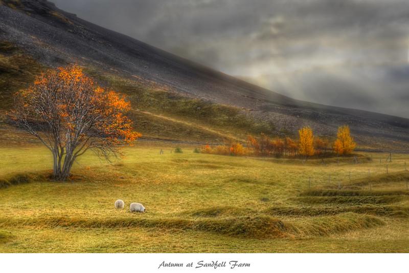 Autumn at Sandfell Farm