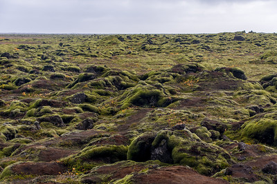 Boulder fields covered in moss