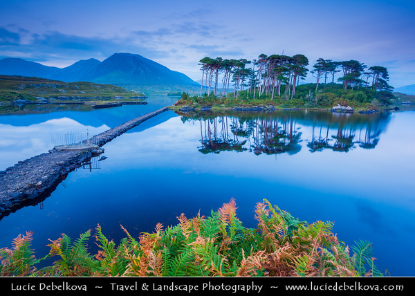 Europe - Ireland - Éire - Airlann - Airlan - County Galway - Connemara National Park - Páirc Naisiúnta Chonamara - Area with scenic mountains, expanses of bogs, heaths, grasslands and woodlands - Derryclare Lough Lake - Iconic Pine Trees Island