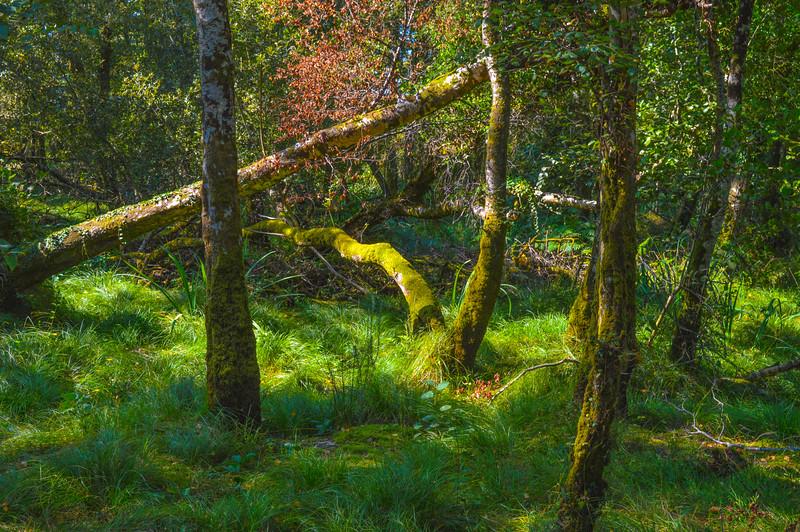 September 2014 | Killarney National Park, County Kerry | Ireland