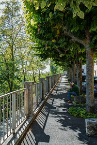 Tree-lined Walkway