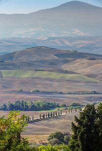 Cypress and Shorn Fields, Val d'Orcia