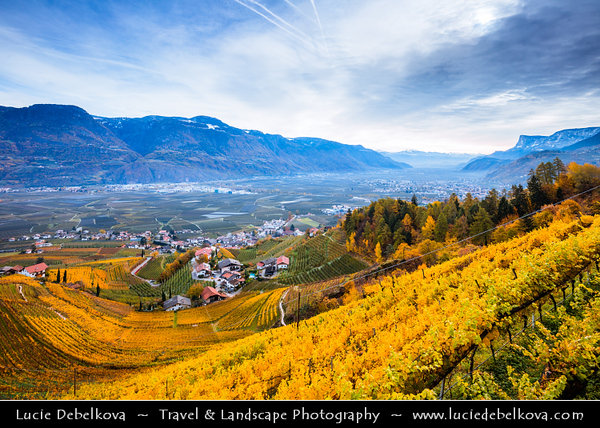 Europe - Italy - Italia - Alps - Province of South Tyrol - Tirol - Bolzano valley basin - Merano area - Adige Valley - Lebenberg Castel - Splendid castle dating from 13th century amidst colourful vineyards high above the municipality of Cermes/ Tscherms during autumn time with fall warm changing colors