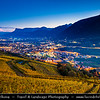 Europe - Italy - Italia - Alps - Province of South Tyrol - Tirol - Bolzano valley basin - Merano area - Adige Valley - Vineyards - Rows of grape bearing vine plantation for winemaking during autumn time with fall warm changing colors