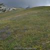 alpine meadow in the Dolomites (= ski slope!)