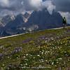 alpine meadow & Mr. Bean