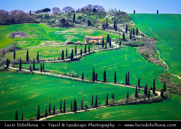 Europe - Italy - Italia - Tuscany - Toscana - Val d'Orcia - Orcia Valley - UNESCO World Heritage Site - Typical view of the rolling hills - Historic, artistic & landscape area of extraordinary beauty - Iconic curvy road with cypress trees on fresh green field during early spring