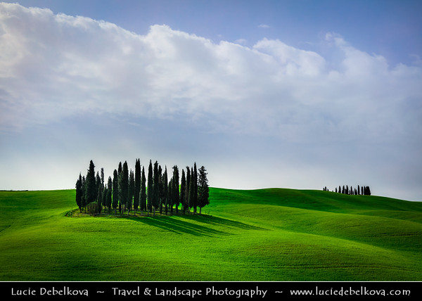 Europe - Italy - Italia - Tuscany - Toscana - Val d'Orcia - Orcia Valley - UNESCO World Heritage Site - Typical view of the rolling hills - Historic, artistic & landscape area of extraordinary beauty - Cipressi di San Quirico d'Orcia - Iconic group of cypress trees on fresh green field during early spring