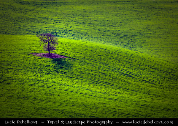 Europe - Italy - Italia - Tuscany - Toscana - Val d'Orcia - Orcia Valley - UNESCO World Heritage Site - Typical view of the rolling hills - Historic, artistic & landscape area of extraordinary beauty during early spring with fresh green fields