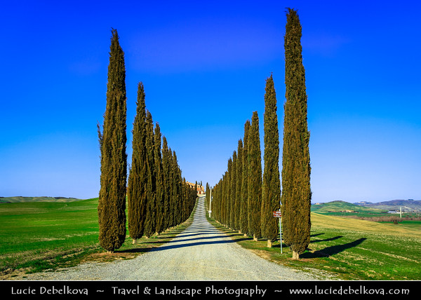 Italy - Tuscany - Toscana - Val d'Orcia - Orcia Valley - UNESCO World Heritage Site - Typical view of the rolling hills - Historic, artistic and landscape area of extraordinary beauty - Cypress avenue - alley (Cupressus) leading to a country house