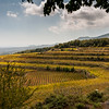 Barone de Villagrande vinyard - Mt Etna, Sicily
