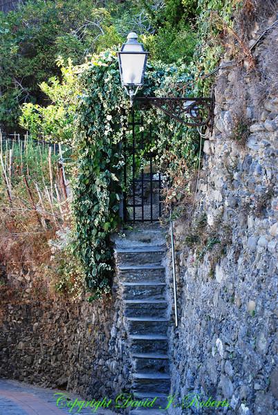 Garden steps, Manarola, Cinque Terre, Italy
