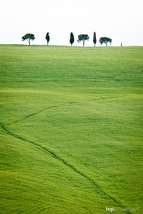 Trees line the top of a green hill in Tuscany