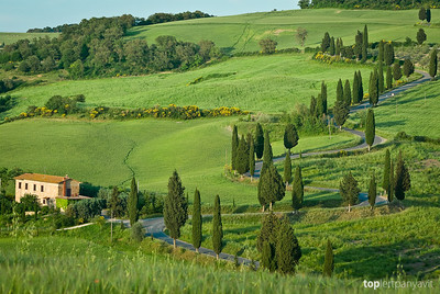 A winding road lined with Cypress trees cuts through the Tuscany landscape