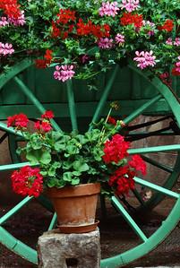 Flowers in a Courtyard
